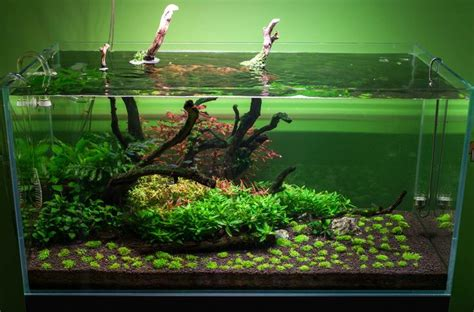 Lu Aquascape 17 best images about aquarium inspiration on how to design end of year and planted