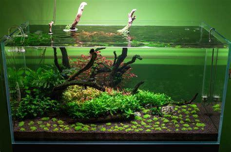 aquarium design kolkata 17 best images about aquarium inspiration on pinterest