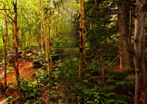 woodland forest plants and trees deciduosforest jackboddy mrs o gorman s website