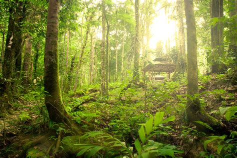 Sprei Green Borneo inhalant addiction huffing addiction