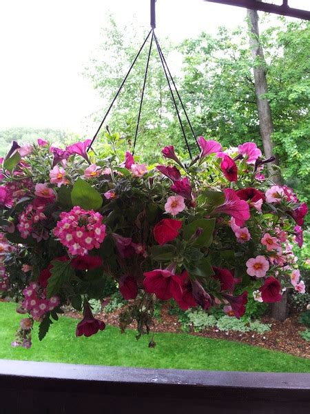 lowes   hanging flower baskets clearance find living rich  couponsliving rich