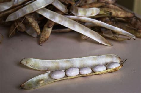 cuisiner les cocos de paimpol gastronomie c 244 tes d armor sp 233 cialit 233 s bretonnes