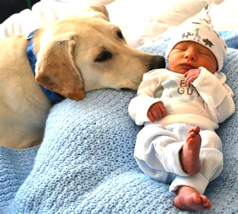 puppies cuddling dogs cuddling with babies suggested post