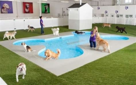 how to kennel a at how to choose a pet hotel biggietips