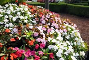 pretty flowers that like shade homesfeed