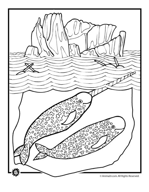 coloring page narwhal narwhal coloring page coloring home