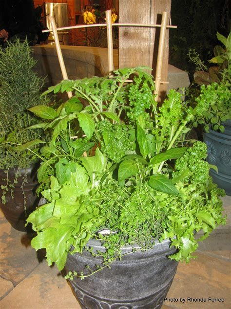 container gardening herbs grow food indoors this winter dig it