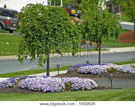 714 cherry tree way weeping cherry snow drive way trees landscape ideas blerick tree farm