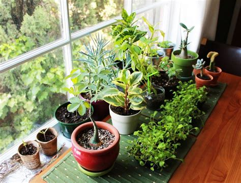where to put plants in house vastu plants for your house the royale