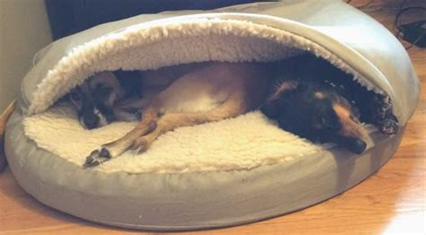 dog cave bed snoozer luxury orthopaedic cozy cave dog bed care 4 dogs on the go