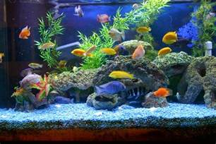 Types Of Aquarium various types of aquarium accessories and devices