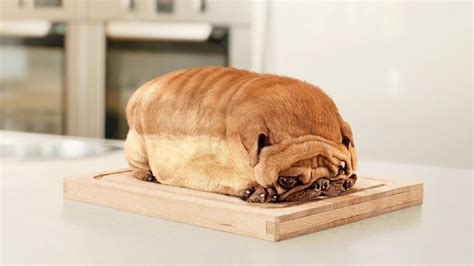 pug loaf of bread animal photos
