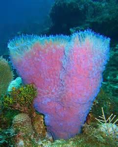 classes and orders of sponges spongebobjfr