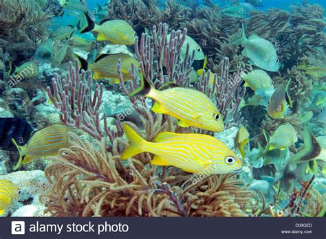 brightly colored fish underwater photo of brightly colored fish and corals on
