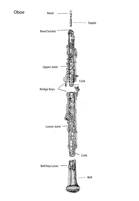 oboe diagram parts of the oboe by tracie noles ross oboe