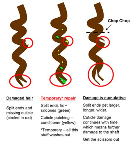 split ends protect your hair from damage with herbal essences 3 reasons heat damage to natural hair cannot be reversed