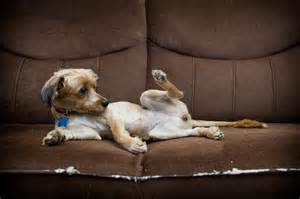 dog heat cycle signs slideshow