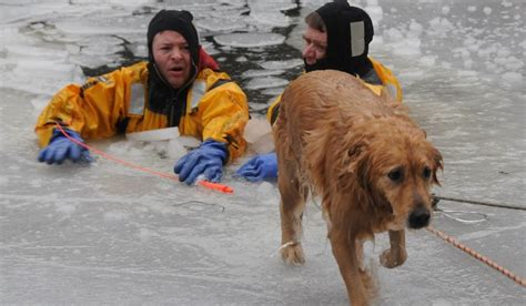 saving dogs firefighter swims in icy charles river to save