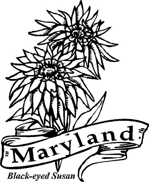 coloring pages of state flowers 50 state flowers coloring pages for