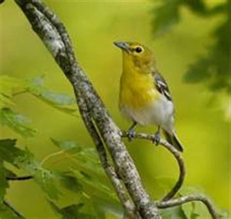 wisconsin all bird conservation plan