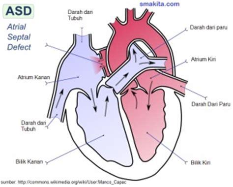 gambar organ jantung manusia dan fungsinya brainly co id