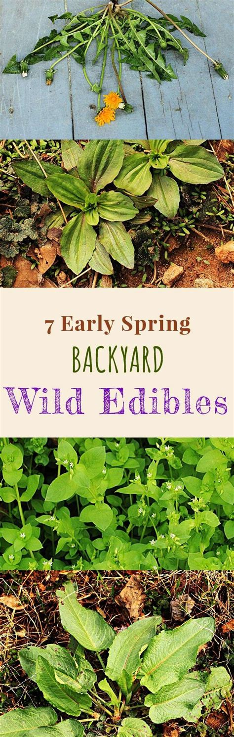 edible backyard plants 25 best ideas about early spring on pinterest early