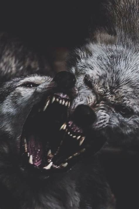 wolf wallpaper pinterest 25 best ideas about angry wolf on pinterest wolf