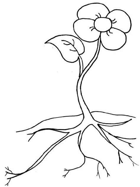 root  beautiful flower coloring page netart