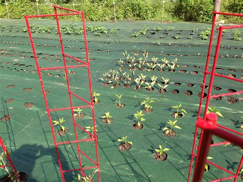 Finally A Weed Barrier That Works Garden Mats Barrier For Vegetable Garden