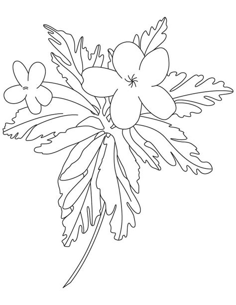 buttercup flower coloring pages download free buttercup