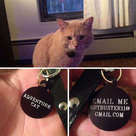 collars show   pets  funny  sarcastic owners