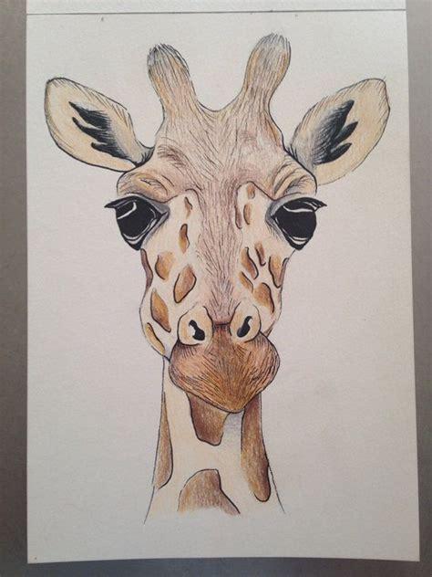 Giraffe Drawings