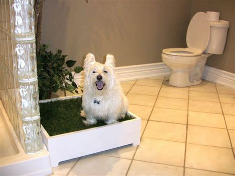 train older dog not to pee in house best indoor dog potty a review of the best indoor dog potty designs
