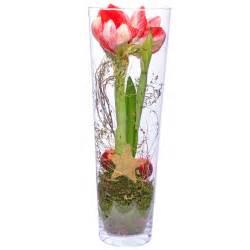 amaryllis in der vase amaryllis im glas versandkostenfrei bestellen bei