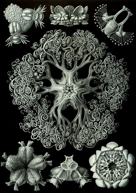 art forms in nature 3791319906 ernst haeckel s art forms in nature