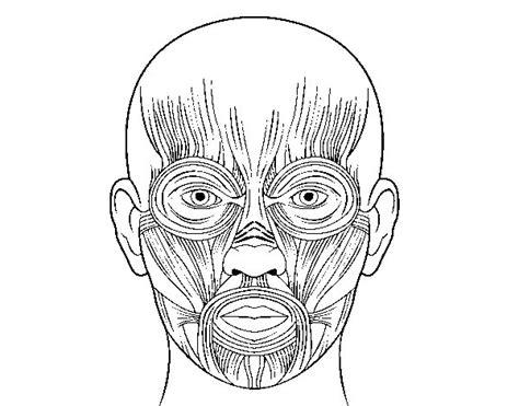 imagenes para pintar la cara huesos de la cara para pintar imagui