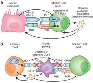 image gallery pd 1 antibody