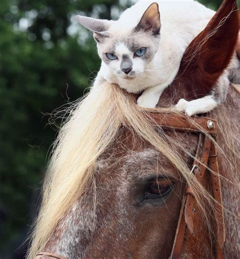 We Are The Cat On Tour by These 15 Horses Are The Best Friends To Animals Of All Types
