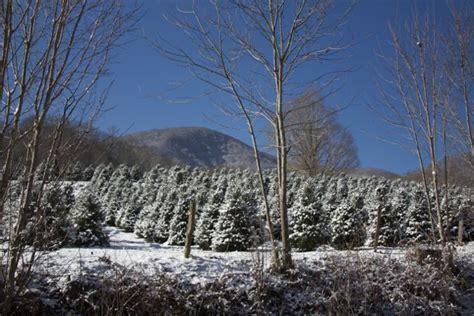 nc mountains tree farm mehaffey tree farm nc trees blue ridge mountain