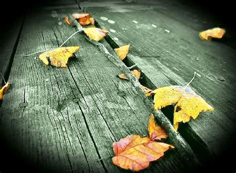 Autumn White by Autumn White Driverlayer Search Engine