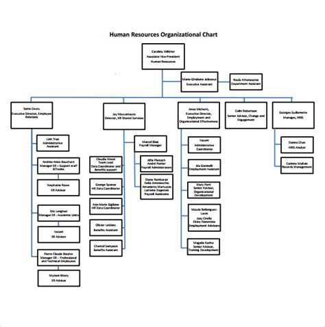 sle human resources organizational chart 9 documents