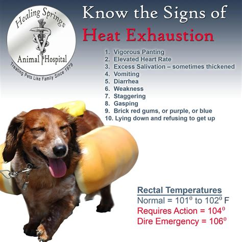 how are dogs in heat for hton roads dogs for adoption summer heat is