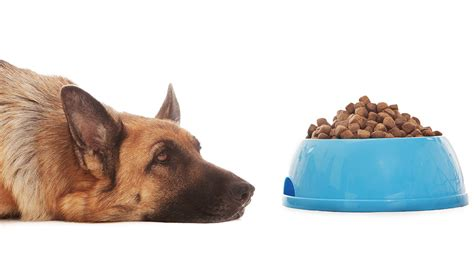 best puppy food for sensitive stomach best food for german shepherds with sensitive stomachs