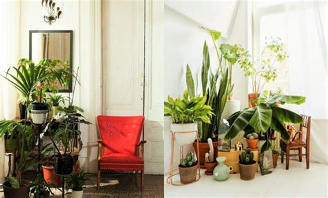 Living Room Decorating Ideas With Plants 7 Different Way To Indoor Plants Decoration Ideas In