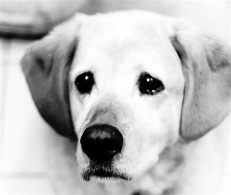puppy lethargic not lethargic not but