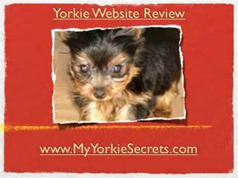 luxating patella in yorkies luxating patellas in terriers serious or not