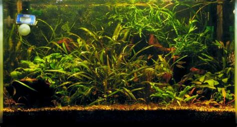 Co2 Package Aquascape 7 the non co2 aquascaping aquatic plant central