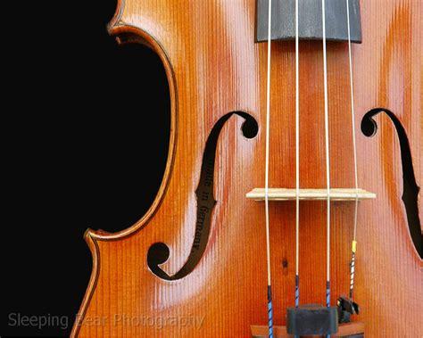 Violin Top sleeping photography violin top