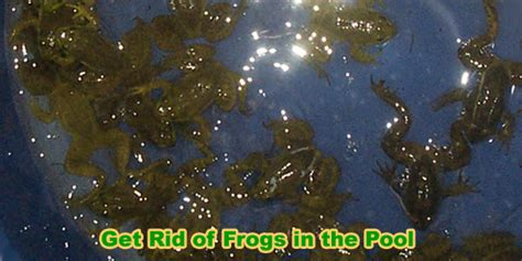 how to get rid of frogs in my backyard how to get rid of frogs in your pool