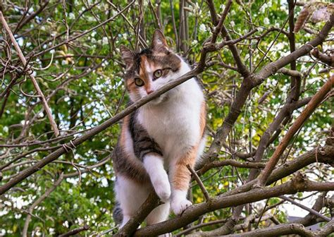 how to keep cats out of your yard through safe ways